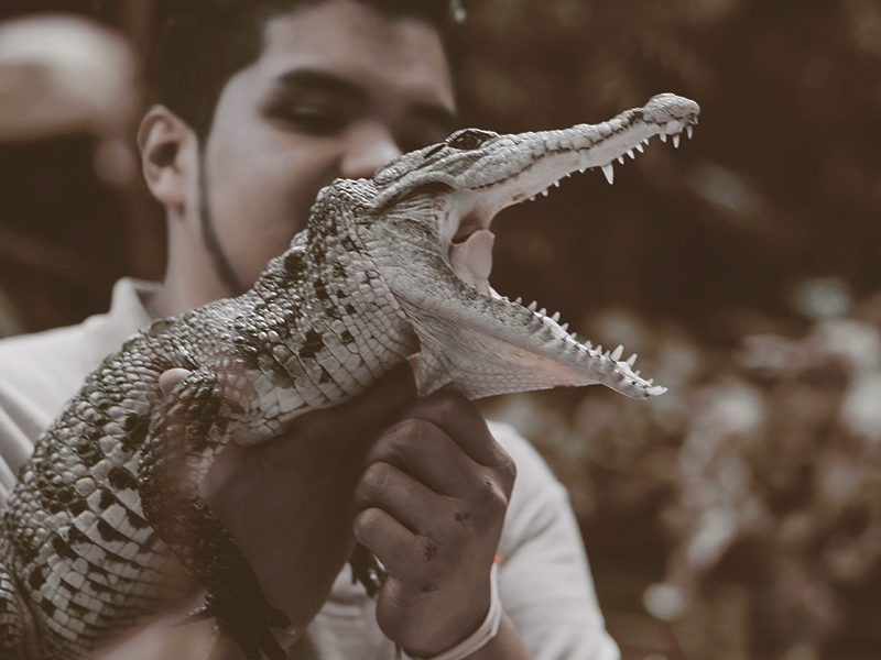 alligator-animal-man-1868861-pexels.jpg
