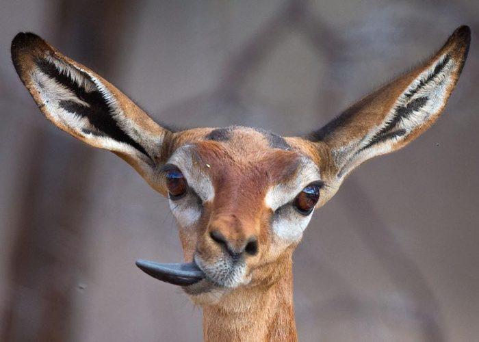 mogens-trolle-wildlife-pictures-20.jpg
